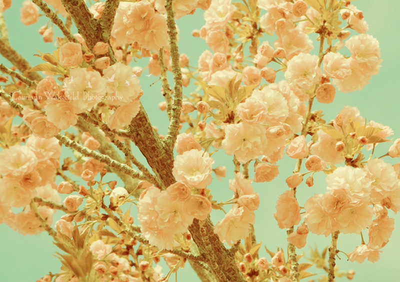 SPRING WALLPAPER_SHOP