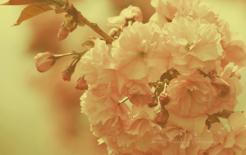 Spring Warmth_shop