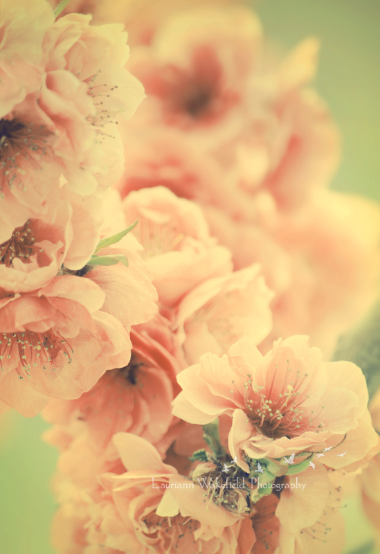 Bliss IN The Spring_shop